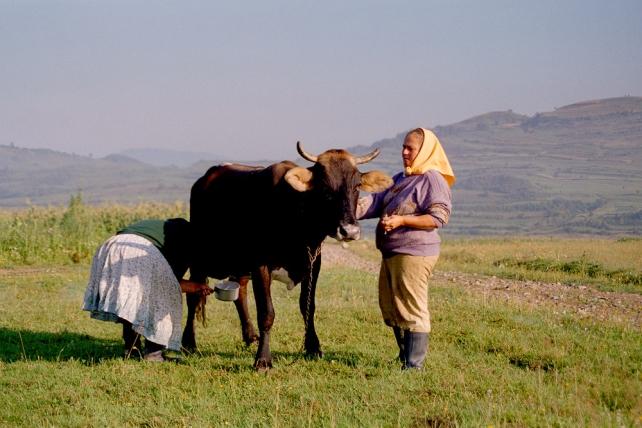 2000-Rumaenien-034