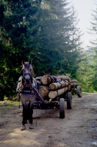 2000-Rumaenien-068