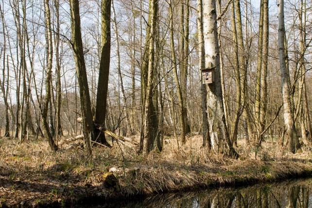 099-mecklenburger-seen