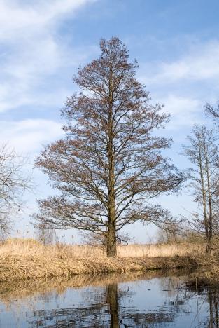 114-mecklenburger-seen