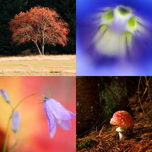 Pflanzen & Pilze