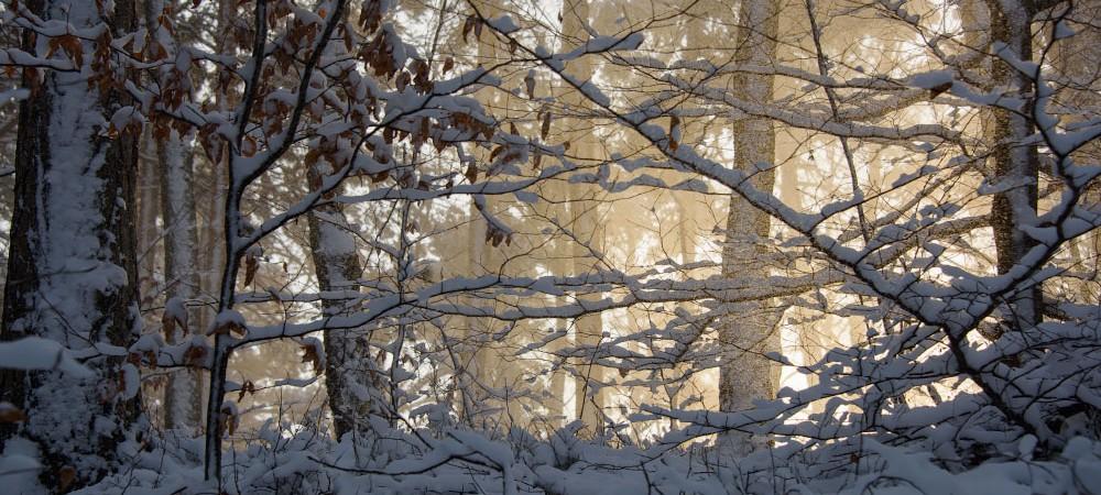 Die Wintersonne strahlt mir durch den Wald entgegen.